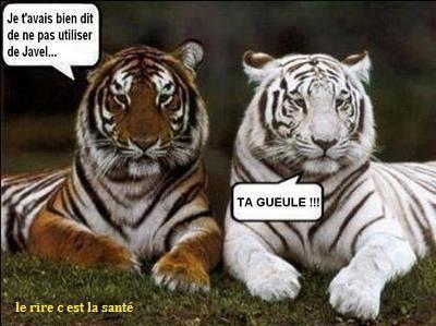 http://abenchaalors.fr/wp-content/uploads/2013/12/humour87e.jpg