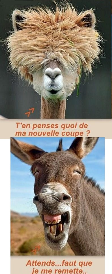 humour8028_n
