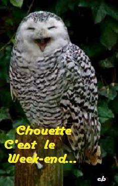 chouette1e