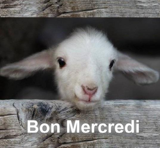 mercredi765_n