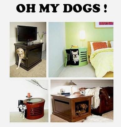 niche chien11