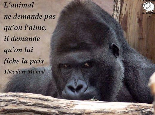 Super Aimer les animaux | abenchaalors.fr DI29
