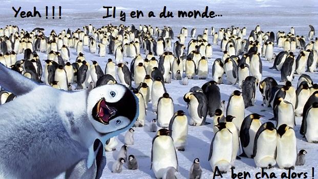 Pingouins-sur-768x1366