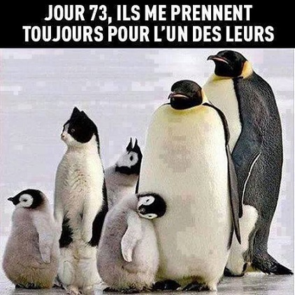humour4n