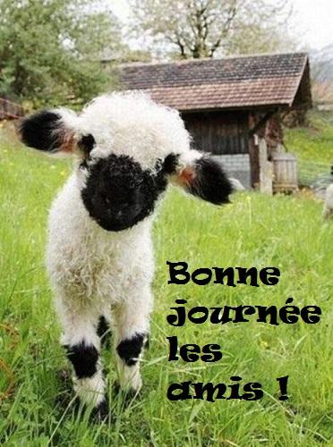 bonjour048_n