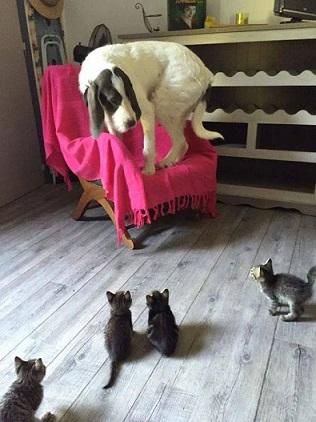 Cohabitation chien et chats - Page 18 Toutou5466_n
