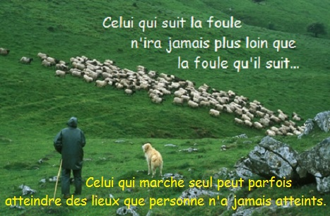 transhumance en pays basque - france