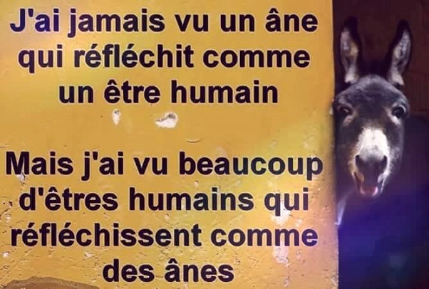 humour86259_n