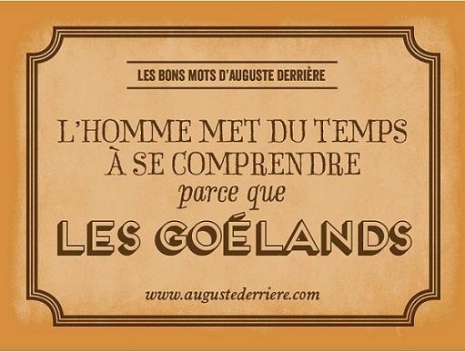 Auguste Derrière les goélands