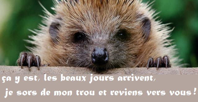 bonjourux